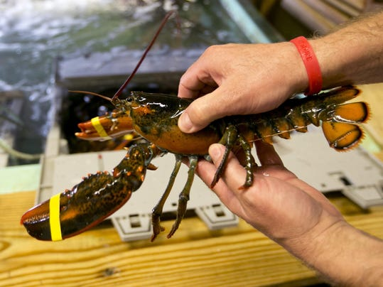 Chinese Lobster Imports