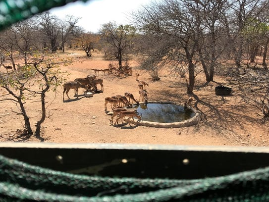 Overlooking a watering hole