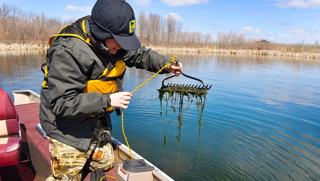 Chris Jurek, a Sauk Rapids-based aquatic invasive species specialist with the Minnesota Department of Natural Resourcese, uses a double-sided rake on a rope to collect samples of starry stonewort Monday, April 4, on Lake Koronis near Paynesville. The DNR is monitoring plant growth to determine the best time to apply a chemical treatment.