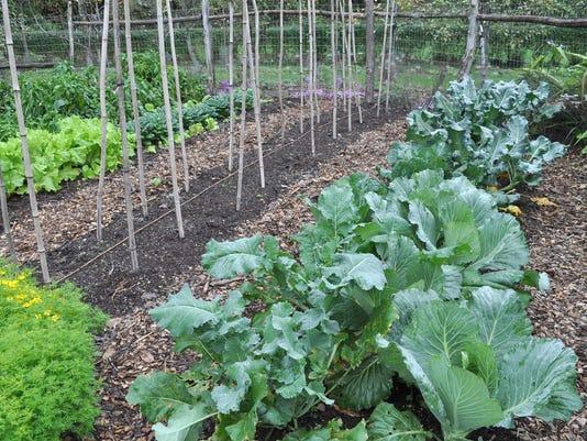 Gardening_Fall_Veggies__chall@pnj.com_6