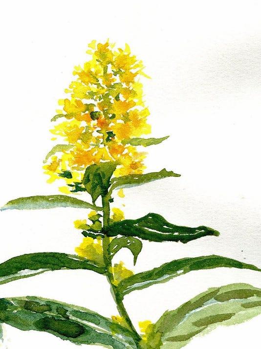 NatureJournal-goldenrod.jpg