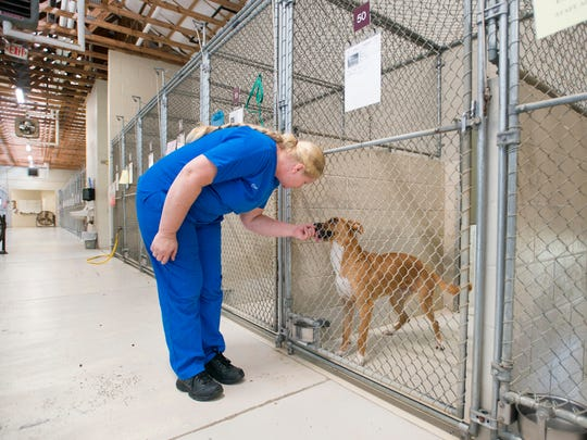 Kennel supervisor Dora Thomason checks on a dog in the kennels at the Santa Rosa County Animal Shelter in Milton on Friday, July 6, 2018.