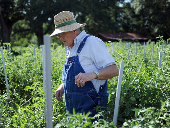 Petal resident Bobby Fennell looks for some ripe tomatos