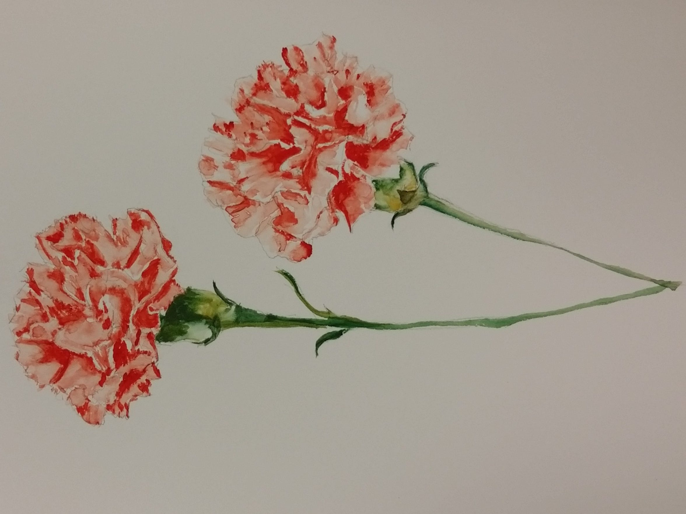 January's birthday flower is the carnation, which blooms in a variety of colors, each holding its own meaing. Pink carnations are said to be associated with Capricorns born in this month, symbolizing distinction, fasicnation and pure love.