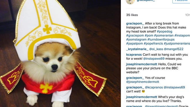 #Popedog is taking over the internet, and it's amazing.