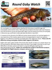 Any round goby caught in the Lake Winnebago System should be reported to the Wisconsin Department of Natural Resources.