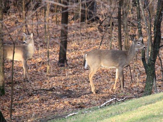 deerFILE.jpg