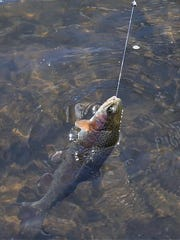 The opening day of trout season in New Jersey was on April 7.
