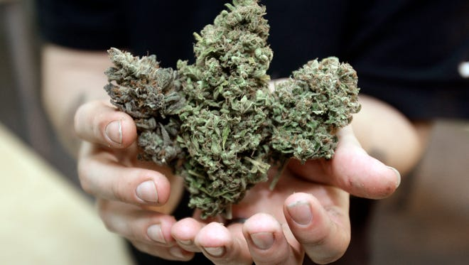 Three types of marijuana buds are shown at Med Grow Cannabis College in Southfield, Mich.