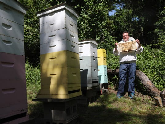636334856219378724-Bees.JPG