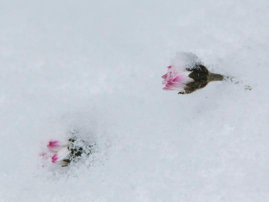 Snow is no respecter of seasons