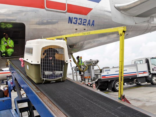 Dot animal deaths on flights focus on cargo not cabin for Air travel with dog in cabin