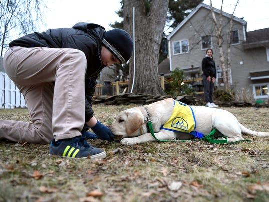 Golden Retreiver Service Dog Fostering