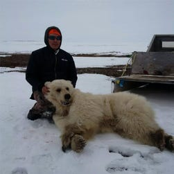 A Facebook image shows the bear believed to be a grizzly-polar bear hybrid.