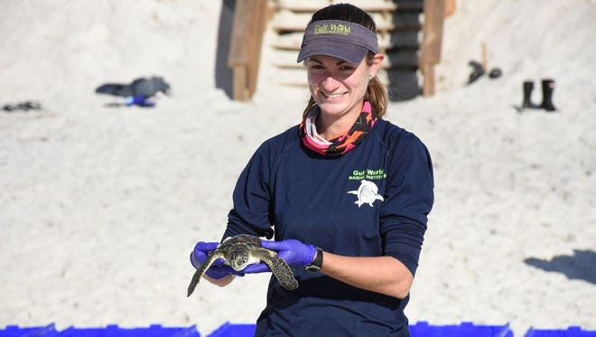 About 350 sea turtles have been released back into the Gulf after a recent cold snap that cold-stunned more than 1,200 of the Panhandle creatures.