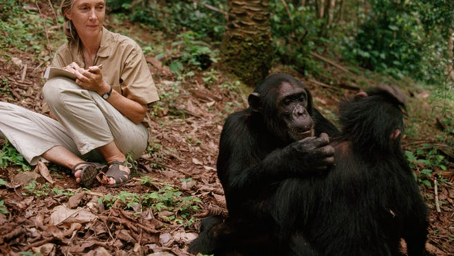 "Famed primatologist Jane Goodall is the focus of ""Jane,"" which screens next month at the start of Indie Memphis' 2018 series."