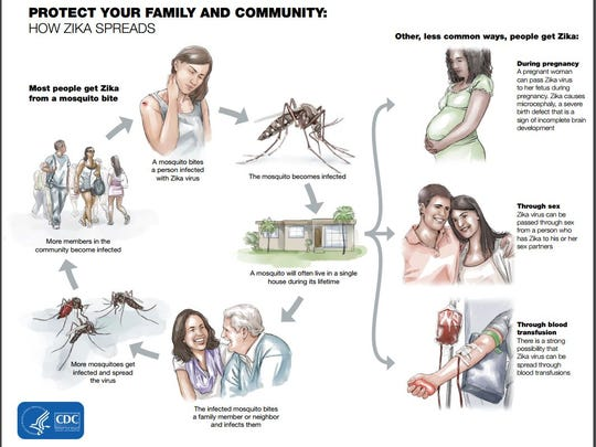 The Zika virus can be spread through direct mosquito