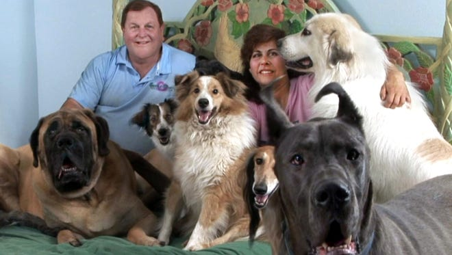 Burt and Tracy Ward in their bedroom surrounded by just a few of their rescue dogs.