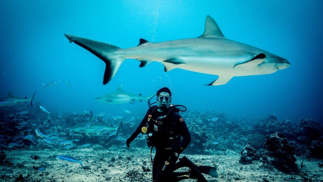 New feeding frenzy on Discovery's Shark Week