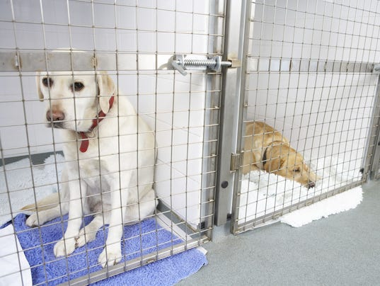 asked-kennel