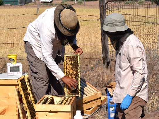 Beekeeper Melanie Kirby of Zia Queen Bees and New Mexico