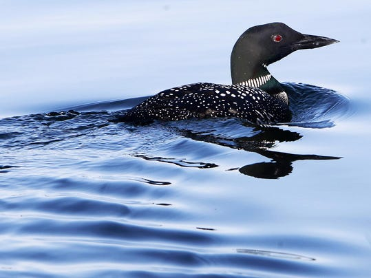 Protecting Loons