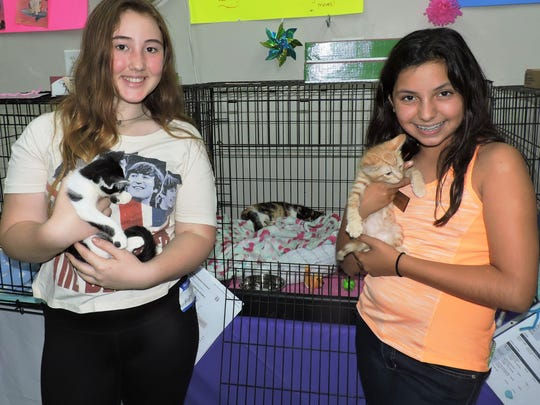 Volunteers Holly Depuis, with Lancelot, and Peyton Neher, with Arthur, take their responsibilities as kitten cuddlers very seriously.