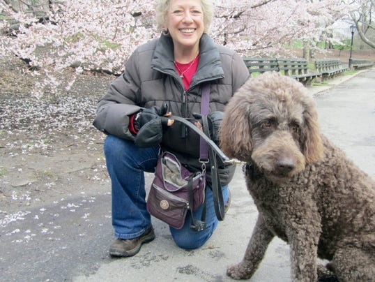 In this April 2014 photo provided by B.L. Ochman, Ochman poses with dog Benny, an 80-pound labradoodle in New York's Central Park. Hotels ranging from major chains to small outposts are capitalizing on the wave of travelers who bring their dogs, some by charging for perks that pamper pets and others by expanding fees. What started as a basic, one-time pet fee has blossomed into a per-night charge at many places and costs that can total hundreds.