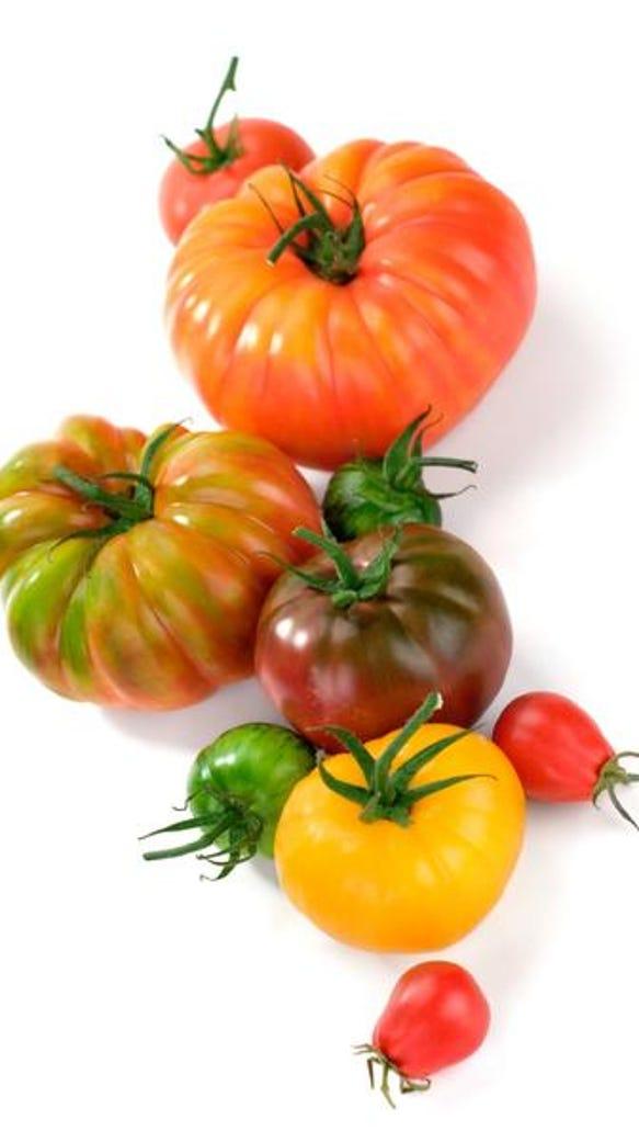 Greenville Garden Center Giving Away 1 000 Tomato Plants