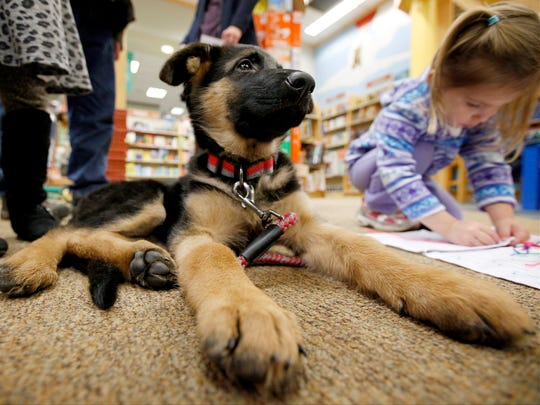 Niko, a German Shepherd previously fostered by the Kramer Foundation, hangs out by some children at a birthday party for Abby, another former Kramer Foundation canine, Saturday at Barnes & Noble.