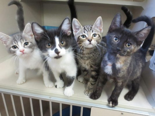 20150724_Bradford_pets_kittens.jpg