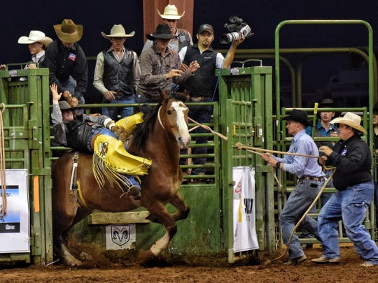 New Mexico State University Rodeo athlete Colton Clemens comes out of the chute in the bare back riding event at the Las Cruces, New Mexico rodeo.