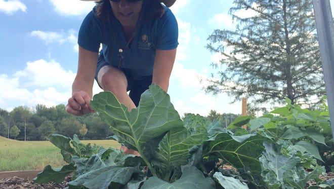 Aerin Brownlee, Greenville County Rec's program coordinator for gardening education, tends to plants in the Children's Education Garden at the Pavilion Recreation Complex in Taylors.