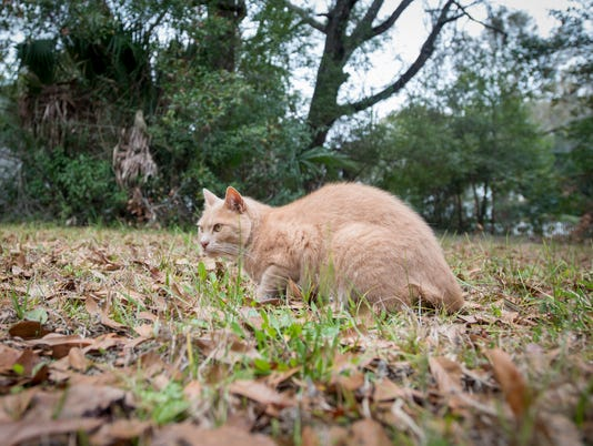 feral Milton cats