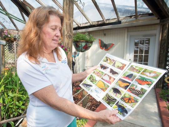 President Pam Murfey shows photos of butterflies that she has taken at the Panhandle Butterfly House in Navarre on Friday, March 16, 2018.