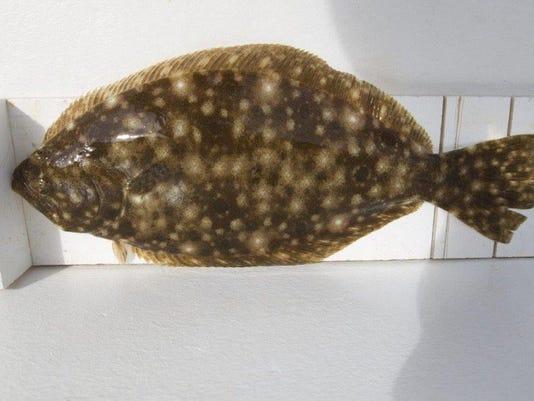 636219921134713406-flounder.jpg