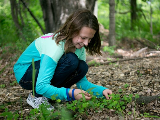 Fifth-grader Emmalee Jaskolski digs up weeds in the outdoor classroom at Madison Elementary School in Stevens Point, Friday, May 29, 2015.