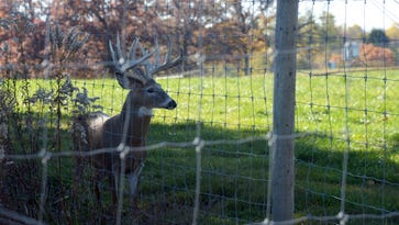 Durkin: Gov. Walker's 'bold' CWD action doesn't go far enough