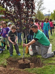Jesse Hon, an urban forester for the city of Sparks, holds the trees for which Juniper Elementary Students lined up to help plant for Arbor Day at Aimone Park on April 29.