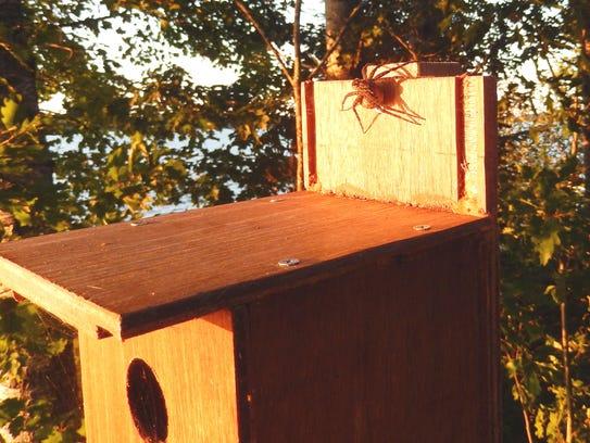 Photo 4 -- giant spiders
