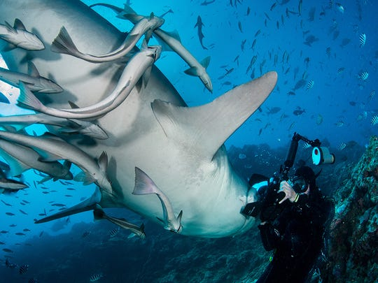 Dr. Theresa Guise began to take underwater photographs soon after learning to scuba dive eight years ago.