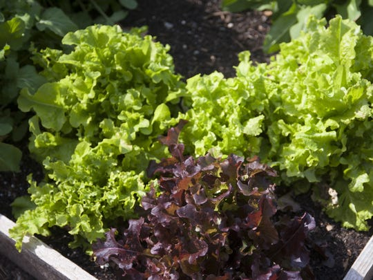 Raised gardening beds, whether made of wood, rocks or just a mound of soil, solve drainage problems in low-lying lawns.