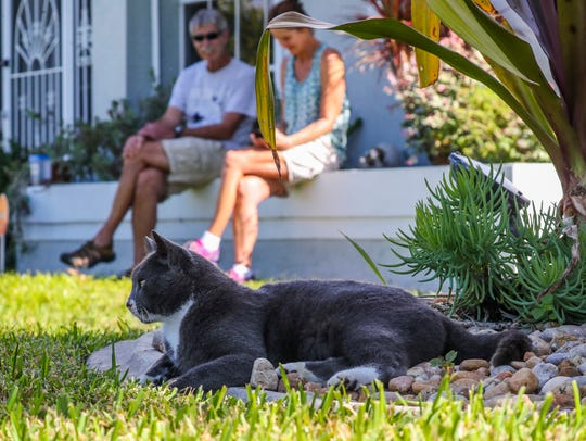 Louie the cat is a stray cat that patrols a Cape Coral