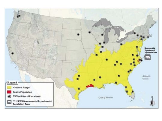 The historic range of the USA's red wolf population is shown in yellow.