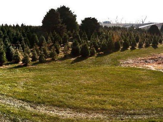 Barnes Tree Farm is located at 4439 Dane Road SW, Iowa City.