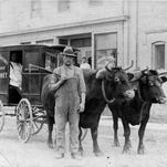 Oxen were once Sheboygan County's choice beasts of burden