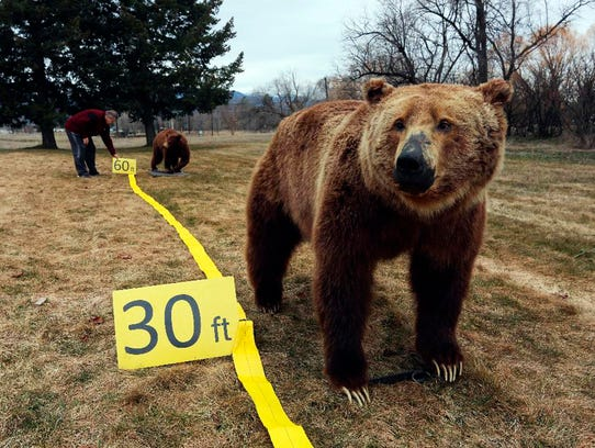 In this March 21, 2018, photo, Be Bear Aware Campaign