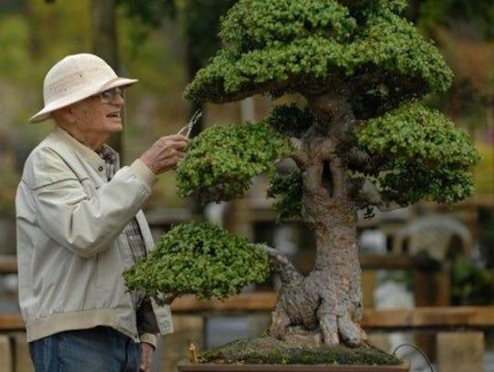 Bonsai Master Jim Smith gifted more than 100 tropical
