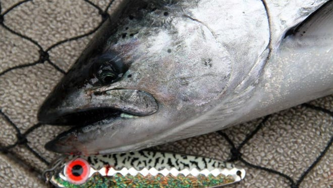 Chinook salmon are arguably the most popular sport fish in Lake Michigan.