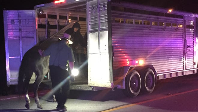 The horse, which was pulling the buggy involved in a fatal accident in May, is loaded into a trailer.